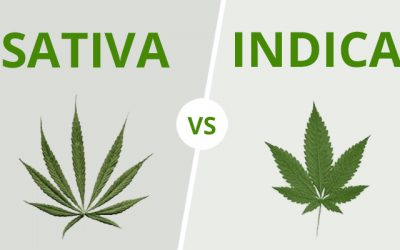 9 DIFFERENCES BETWEEN INDICA VS. SATIVA